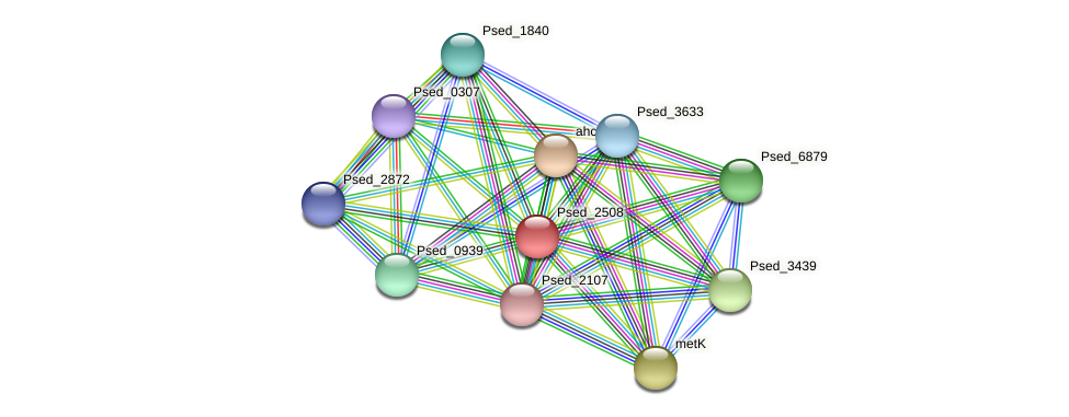 Psed_2508 protein (Pseudonocardia dioxanivorans) - STRING interaction network