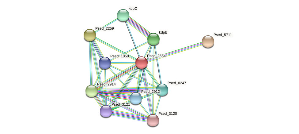 Psed_2554 protein (Pseudonocardia dioxanivorans) - STRING interaction network