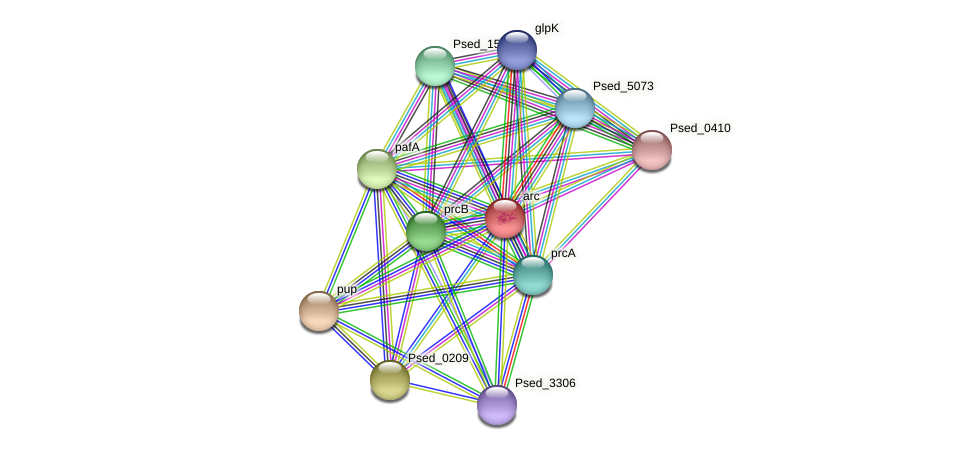 Psed_3319 protein (Pseudonocardia dioxanivorans) - STRING interaction network