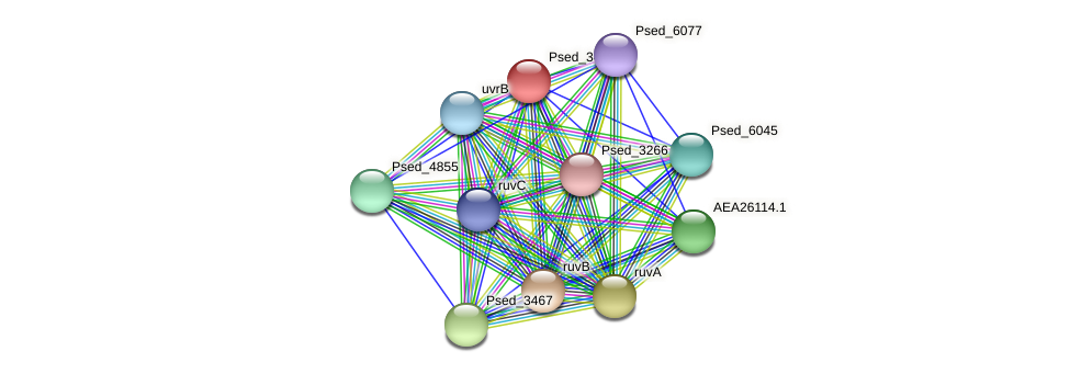 Psed_3468 protein (Pseudonocardia dioxanivorans) - STRING interaction network