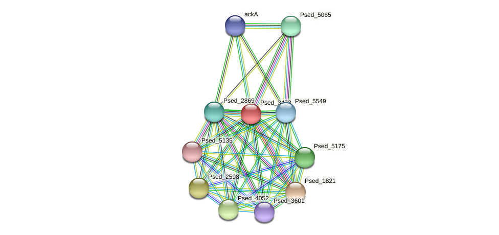 Psed_3473 protein (Pseudonocardia dioxanivorans) - STRING interaction network