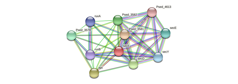 secF protein (Pseudonocardia dioxanivorans) - STRING interaction network