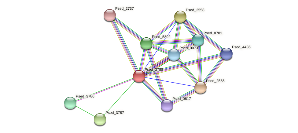 Psed_3788 protein (Pseudonocardia dioxanivorans) - STRING interaction network
