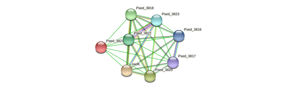 Psed_3821 protein (Pseudonocardia dioxanivorans) - STRING interaction network