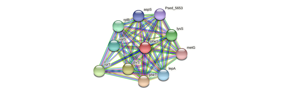 pheS protein (Pseudonocardia dioxanivorans) - STRING interaction network