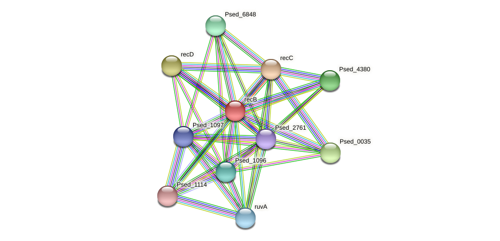 recB protein (Pseudonocardia dioxanivorans) - STRING interaction network