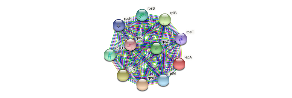 lepA protein (Pseudonocardia dioxanivorans) - STRING interaction network