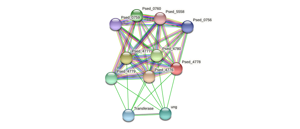 Psed_4778 protein (Pseudonocardia dioxanivorans) - STRING interaction network