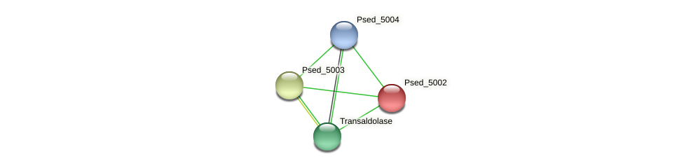 Psed_5002 protein (Pseudonocardia dioxanivorans) - STRING interaction network
