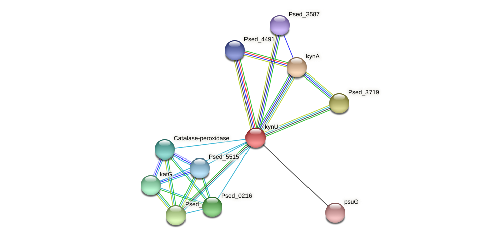 kynU protein (Pseudonocardia dioxanivorans) - STRING interaction network