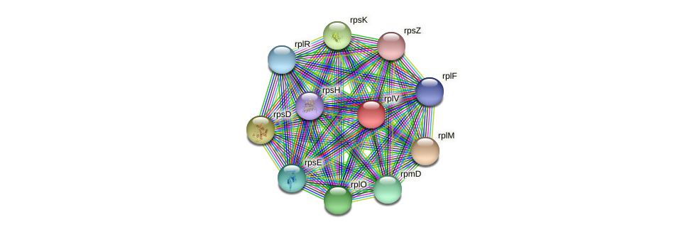 rplV protein (Pseudonocardia dioxanivorans) - STRING interaction network