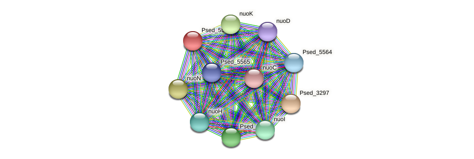 Psed_5563 protein (Pseudonocardia dioxanivorans) - STRING interaction network