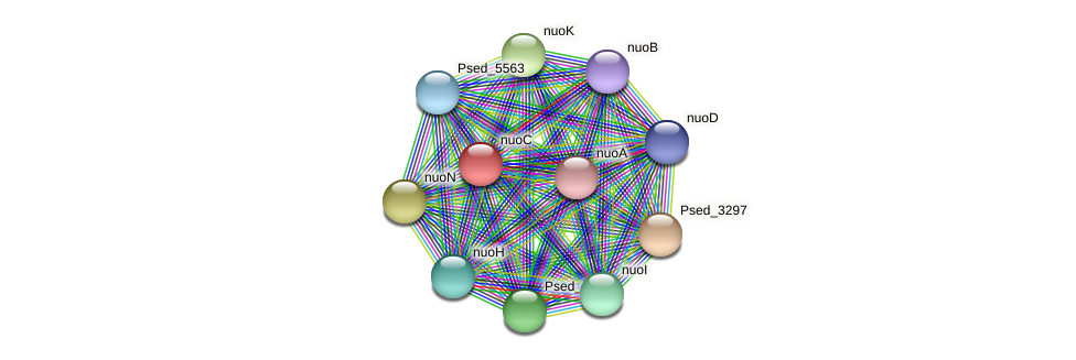 nuoC protein (Pseudonocardia dioxanivorans) - STRING interaction network