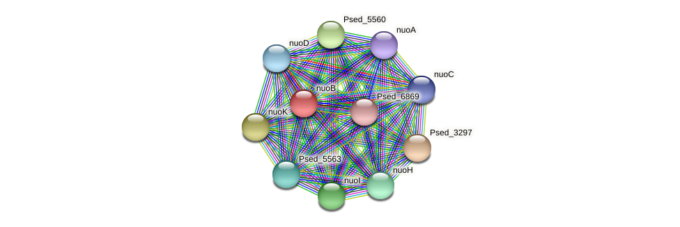 nuoB protein (Pseudonocardia dioxanivorans) - STRING interaction network