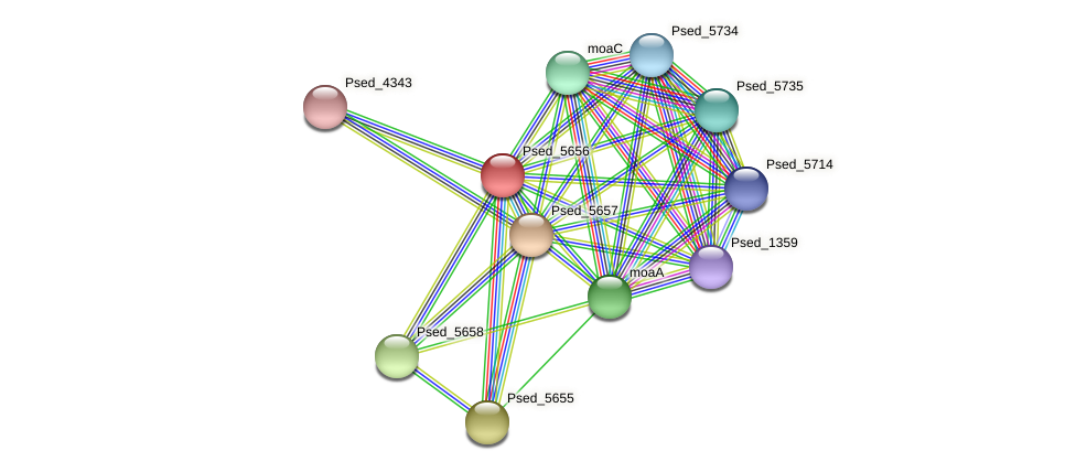 Psed_5656 protein (Pseudonocardia dioxanivorans) - STRING interaction network