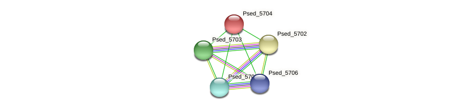 Psed_5704 protein (Pseudonocardia dioxanivorans) - STRING interaction network