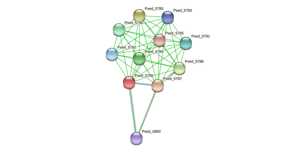 Psed_5786 protein (Pseudonocardia dioxanivorans) - STRING interaction network