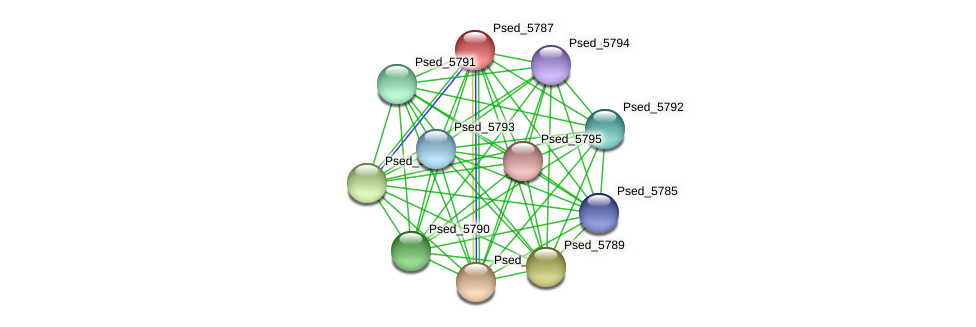Psed_5787 protein (Pseudonocardia dioxanivorans) - STRING interaction network
