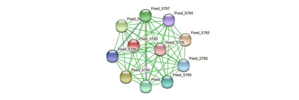 Psed_5793 protein (Pseudonocardia dioxanivorans) - STRING interaction network
