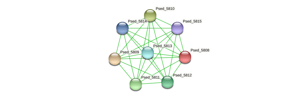 Psed_5808 protein (Pseudonocardia dioxanivorans) - STRING interaction network