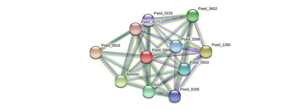 Psed_5846 protein (Pseudonocardia dioxanivorans) - STRING interaction network