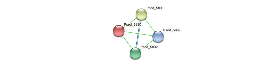 Psed_5890 protein (Pseudonocardia dioxanivorans) - STRING interaction network