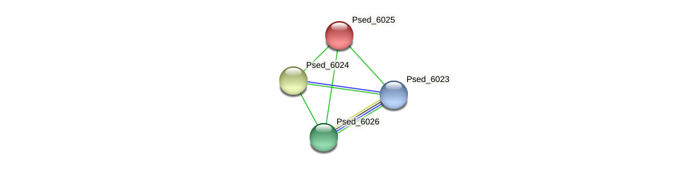 Psed_6025 protein (Pseudonocardia dioxanivorans) - STRING interaction network