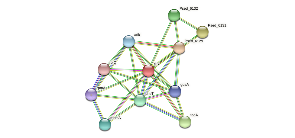 tilS protein (Pseudonocardia dioxanivorans) - STRING interaction network