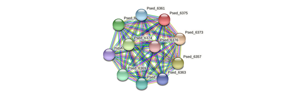Psed_6375 protein (Pseudonocardia dioxanivorans) - STRING interaction network