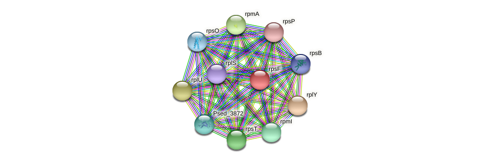 rpsF protein (Pseudonocardia dioxanivorans) - STRING interaction network