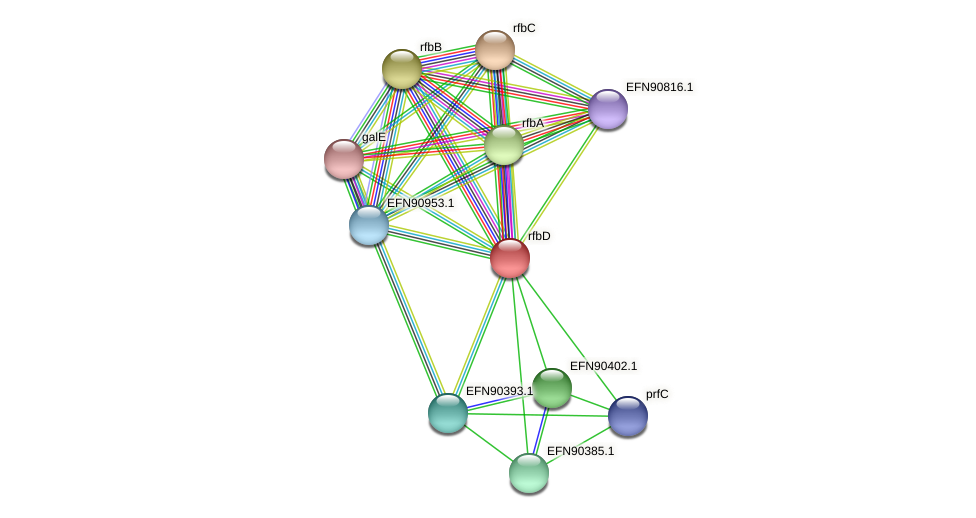 rfbD protein (Prevotella amnii) - STRING interaction network