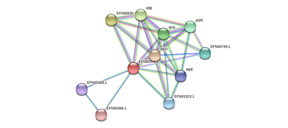 HMPREF9018_0026 protein (Prevotella amnii) - STRING interaction network