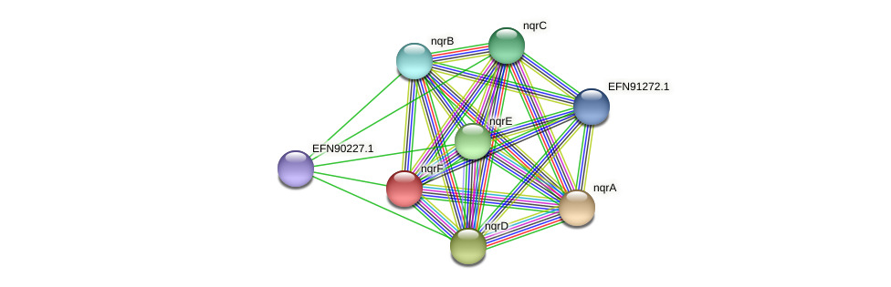 nqrF protein (Prevotella amnii) - STRING interaction network