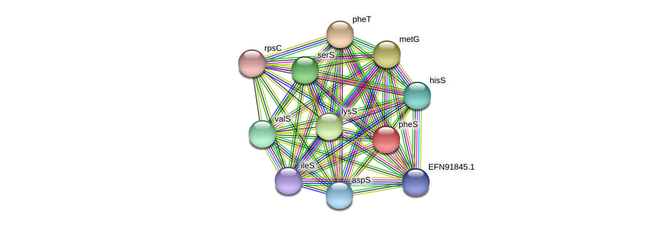 pheS protein (Prevotella amnii) - STRING interaction network