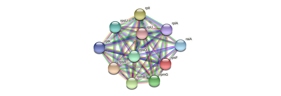 rpsF protein (Prevotella amnii) - STRING interaction network