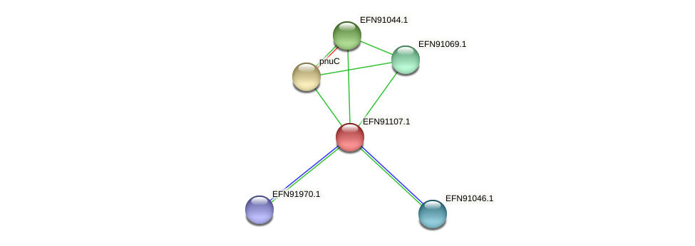 HMPREF9018_0255 protein (Prevotella amnii) - STRING interaction network