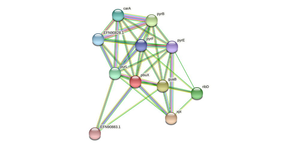 pbuX protein (Prevotella amnii) - STRING interaction network