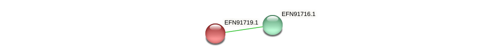 EFN91719.1 protein (Prevotella amnii) - STRING interaction network