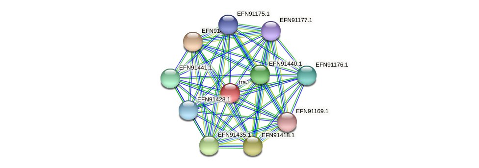 HMPREF9018_0464 protein (Prevotella amnii) - STRING interaction network
