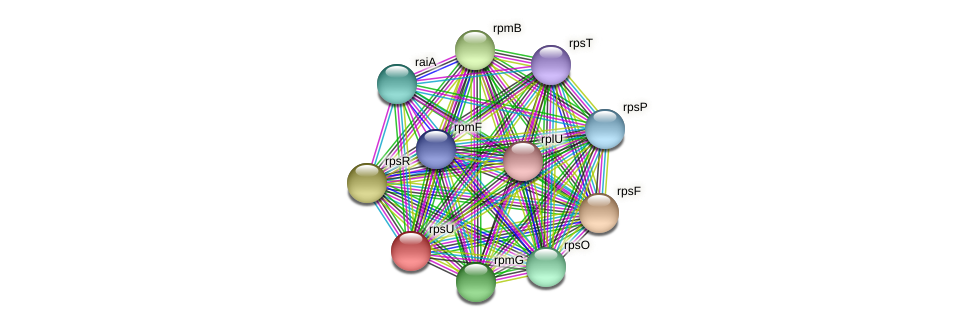 rpsU protein (Prevotella amnii) - STRING interaction network
