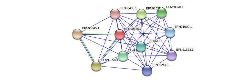 HMPREF9018_0686 protein (Prevotella amnii) - STRING interaction network