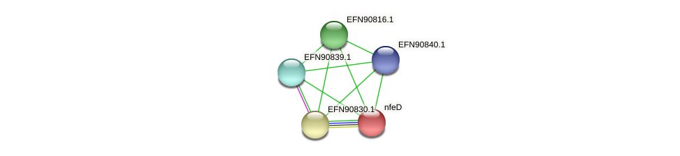 nfeD protein (Prevotella amnii) - STRING interaction network