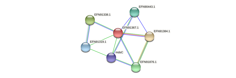 HMPREF9018_0737 protein (Prevotella amnii) - STRING interaction network