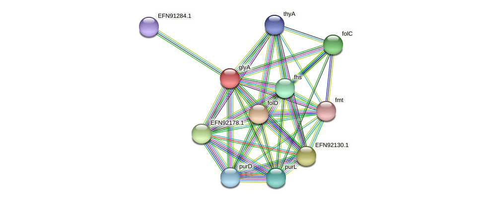 glyA protein (Prevotella amnii) - STRING interaction network