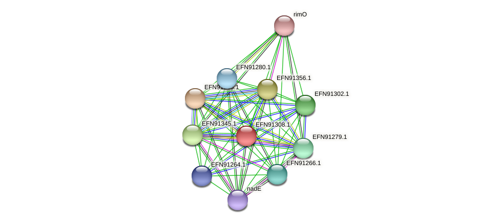 HMPREF9018_0837 protein (Prevotella amnii) - STRING interaction network