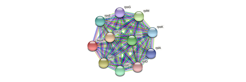 lepA protein (Prevotella amnii) - STRING interaction network