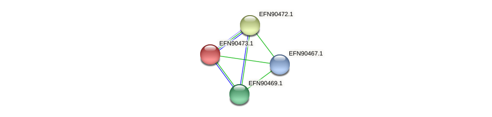 HMPREF9018_0860 protein (Prevotella amnii) - STRING interaction network