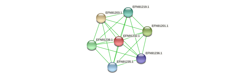 HMPREF9018_0939 protein (Prevotella amnii) - STRING interaction network