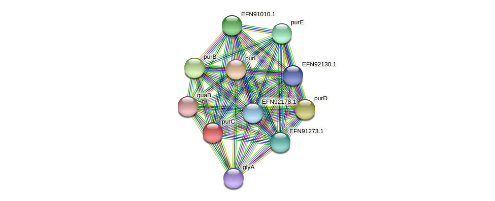 purC protein (Prevotella amnii) - STRING interaction network