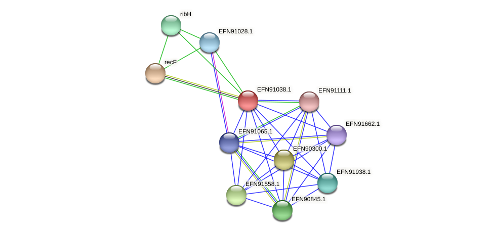 HMPREF9018_0997 protein (Prevotella amnii) - STRING interaction network